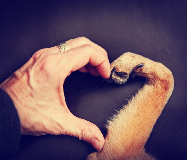 person-and-dog-making-a-heart