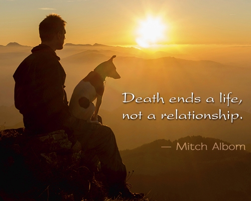 pet-loss-quote-by-mitch-albom