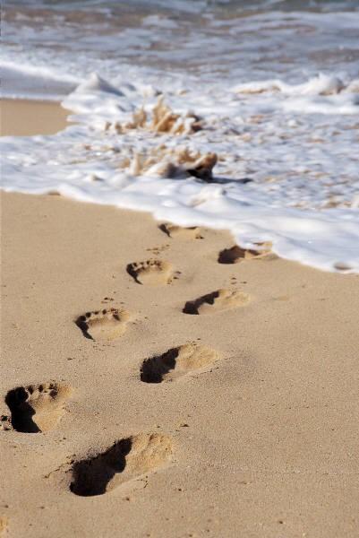 beach paws walk